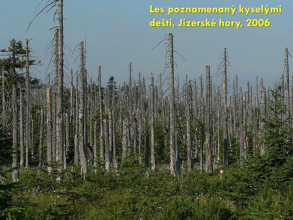 Les poznamenaný kyselými dešti, Jizerské hory, 2006