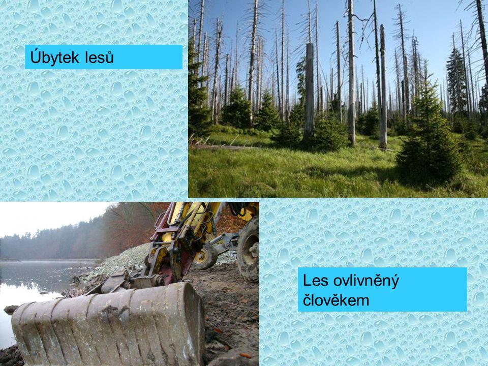 Úbytek lesů Les ovlivněný člověkem