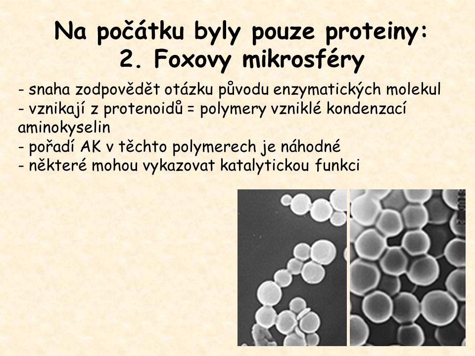 Na počátku byly pouze proteiny: 2. Foxovy mikrosféry - snaha zodpovědět otázku původu enzymatických molekul - vznikají z protenoidů = polymery vzniklé