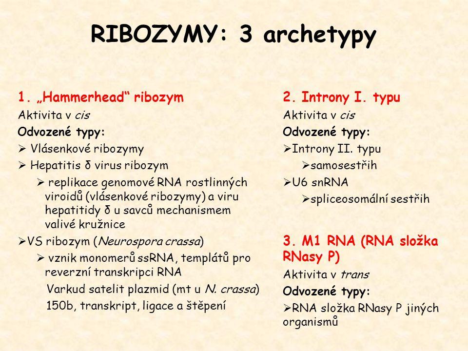 """RIBOZYMY: 3 archetypy 1. """"Hammerhead"""" ribozym Aktivita v cis Odvozené typy:  Vlásenkové ribozymy  Hepatitis δ virus ribozym  replikace genomové RNA"""