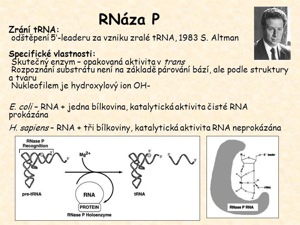 Zrání tRNA: odštěpení 5'-leaderu za vzniku zralé tRNA, 1983 S. Altman Specifické vlastnosti: Skutečný enzym – opakovaná aktivita v trans Rozpoznání su