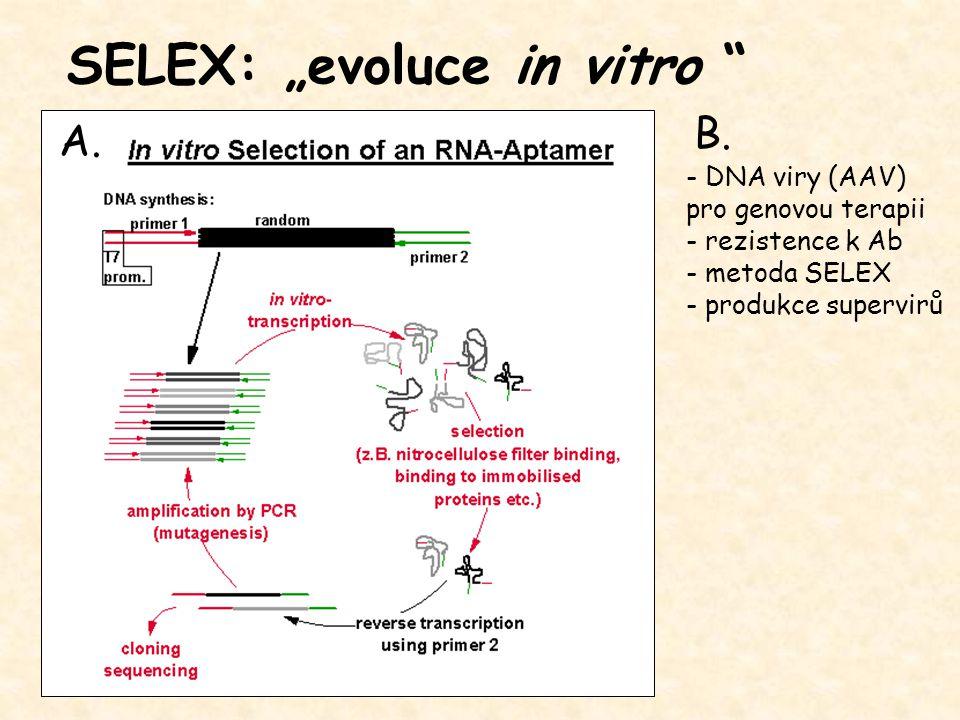 "SELEX: ""evoluce in vitro "" - DNA viry (AAV) pro genovou terapii - rezistence k Ab - metoda SELEX - produkce supervirů A. B."
