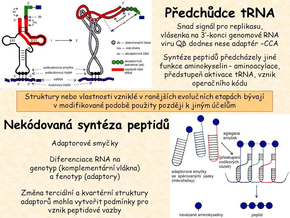 Předchůdce tRNA Snad signál pro replikasu, vlásenka na 3'-konci genomové RNA viru Qβ dodnes nese adaptér –CCA Syntéze peptidů předcházely jiné funkce