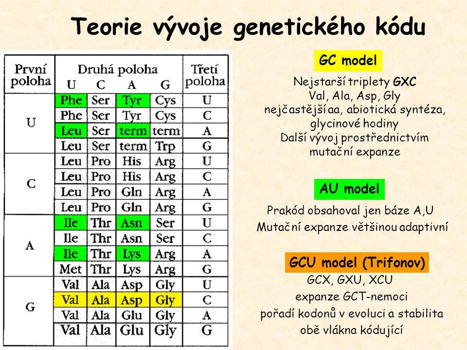 Teorie vývoje genetického kódu GC model AU model Nejstarší triplety GXC Val, Ala, Asp, Gly nejčastější aa, abiotická syntéza, glycinové hodiny Další v
