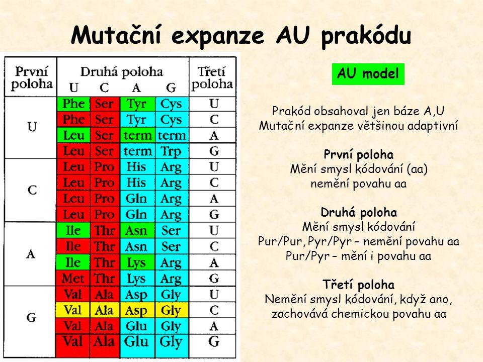 Mutační expanze AU prakódu AU model Prakód obsahoval jen báze A,U Mutační expanze většinou adaptivní První poloha Mění smysl kódování (aa) nemění pova