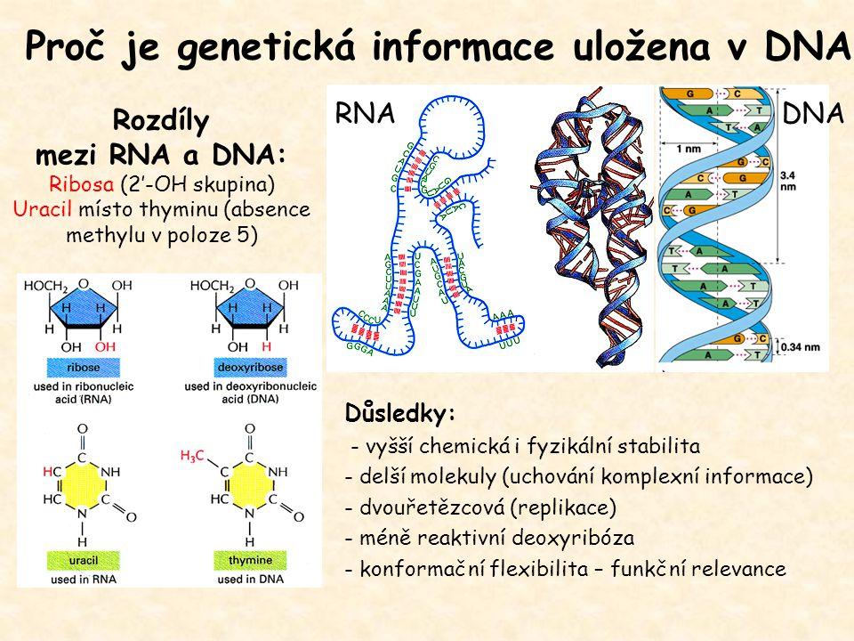 Rozdíly mezi RNA a DNA: Ribosa (2'-OH skupina) Uracil místo thyminu (absence methylu v poloze 5) Důsledky: - vyšší chemická i fyzikální stabilita - de