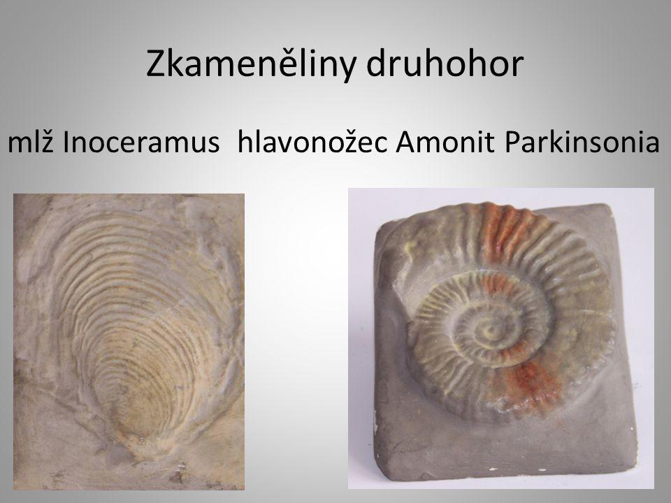 Zkameněliny druhohor mlž Inoceramus hlavonožec Amonit Parkinsonia