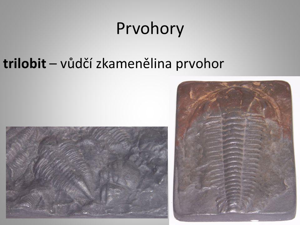 Prvohory trilobit – vůdčí zkamenělina prvohor