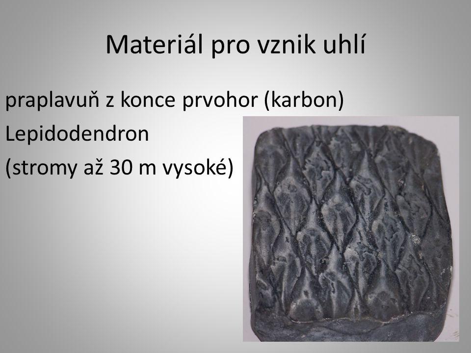 Materiál pro vznik uhlí praplavuň z konce prvohor (karbon) Lepidodendron (stromy až 30 m vysoké)