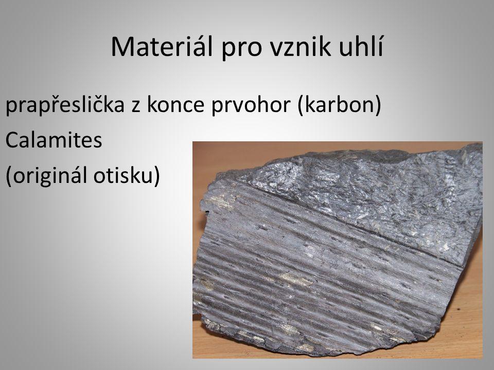 Materiál pro vznik uhlí prapřeslička z konce prvohor (karbon) Calamites (originál otisku)