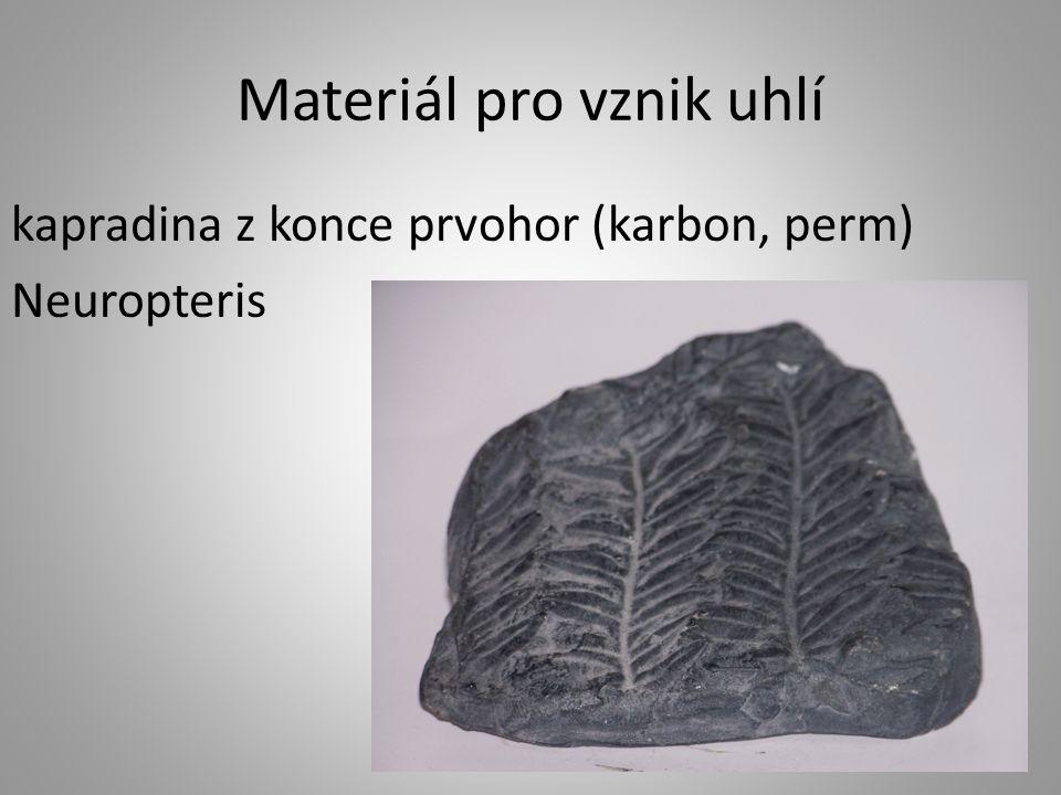 Měkkýši z minulosti hlavonožci amoniti – vůdčí zkameněliny mladších prvohor a druhohor