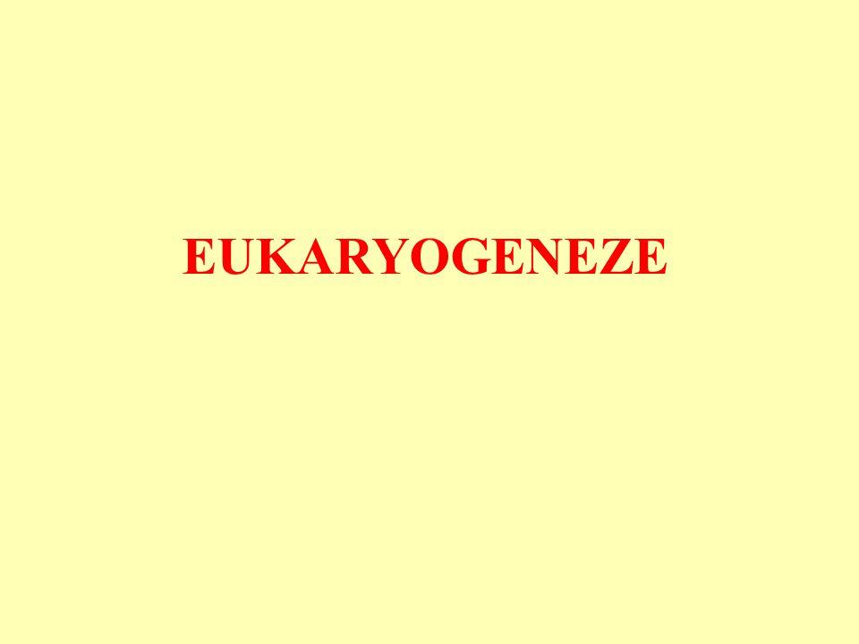 Vznik eukaryot Došlo k němu jen jednou.