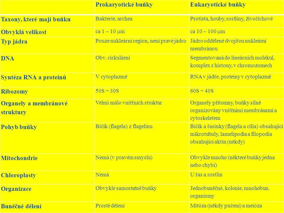 Prokaryotické buňkyEukaryotické buňky Taxony, které mají buňku Bakterie, archeaProtista, houby, rostliny, živočichové Obvyklá velikost ca 1 – 10  mca