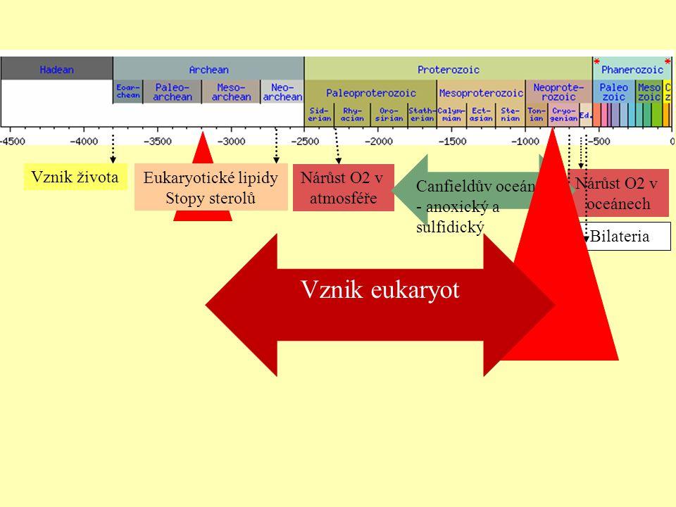 Nárůst O2 v oceánech Nárůst O2 v atmosféře Vznik života Bilateria Canfieldův oceán - anoxický a sulfidický Eukaryotické lipidy Stopy sterolů Vznik euk