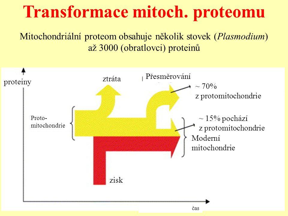 Transformace mitoch. proteomu Proto- mitochondrie ztráta Přesměrování ~ 70% z protomitochondrie zisk Moderní mitochondrie ~ 15% pochází z protomitocho