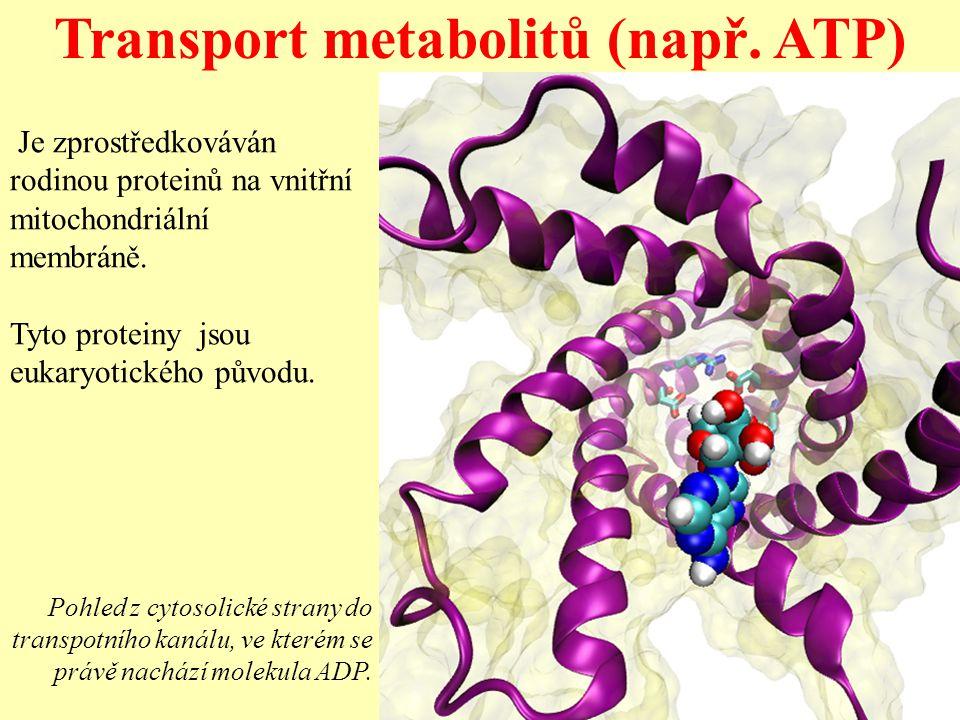 Transport metabolitů (např. ATP) Je zprostředkováván rodinou proteinů na vnitřní mitochondriální membráně. Tyto proteiny jsou eukaryotického původu. P