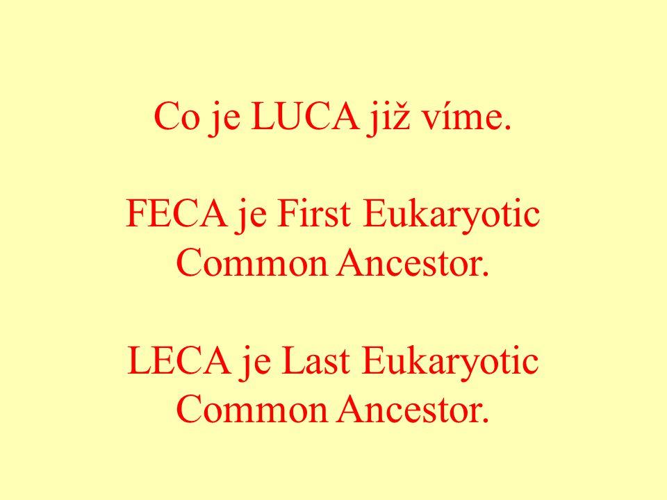 Co je LUCA již víme. FECA je First Eukaryotic Common Ancestor. LECA je Last Eukaryotic Common Ancestor.