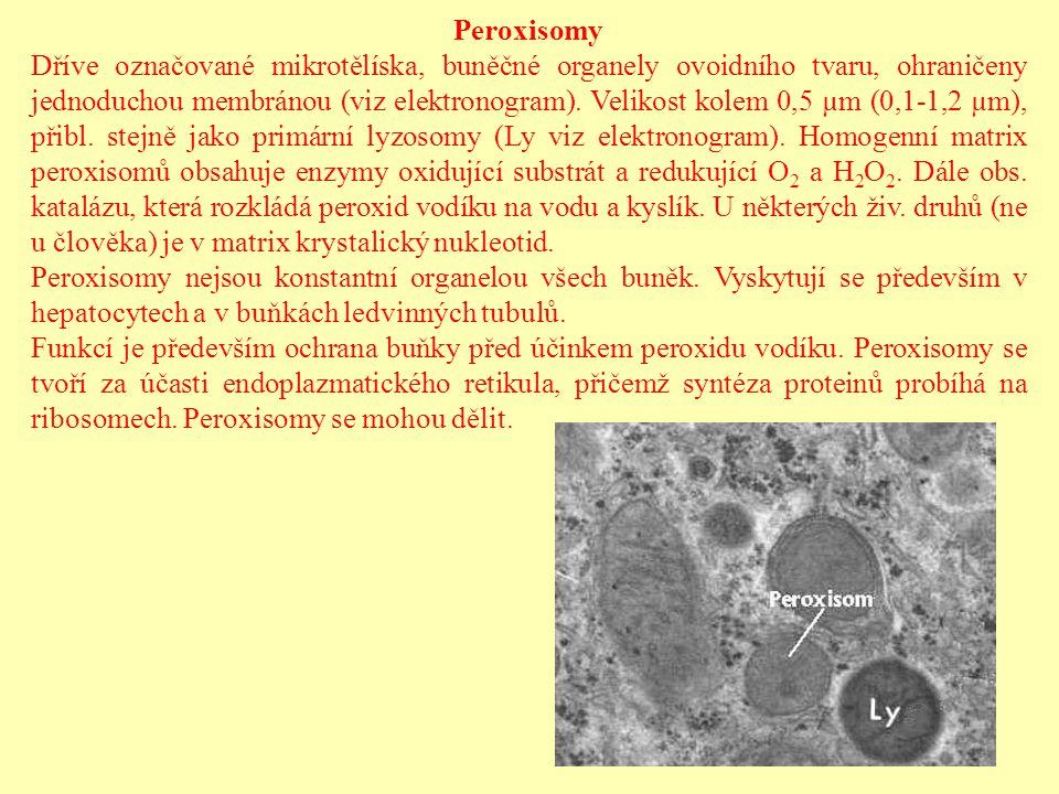 Peroxisomy Dříve označované mikrotělíska, buněčné organely ovoidního tvaru, ohraničeny jednoduchou membránou (viz elektronogram). Velikost kolem 0,5 µ