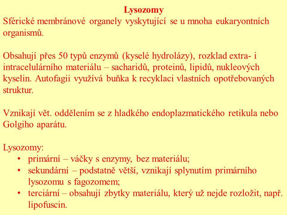 Lysozomy Sférické membránové organely vyskytující se u mnoha eukaryontních organismů. Obsahují přes 50 typů enzymů (kyselé hydrolázy), rozklad extra-