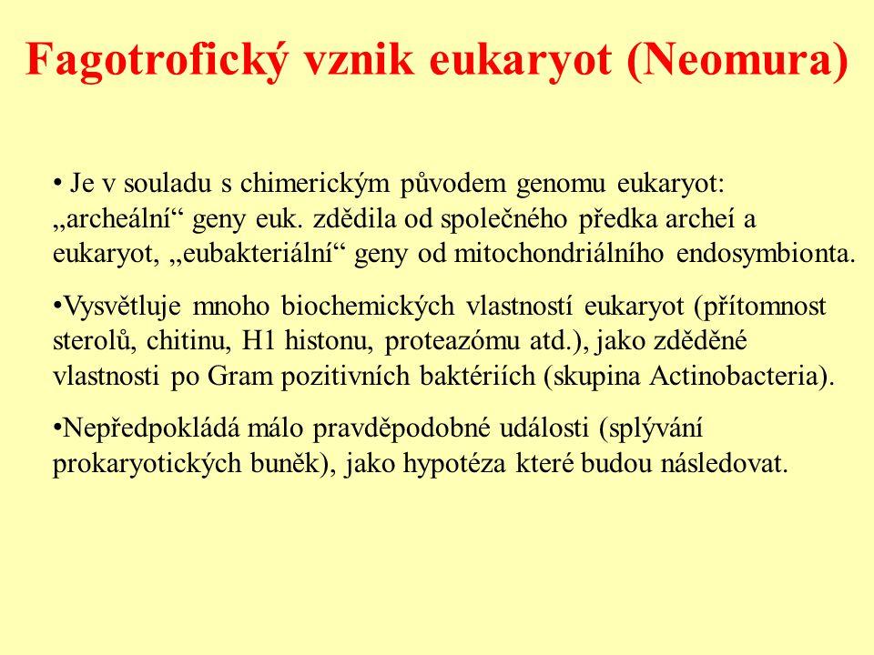 """Je v souladu s chimerickým původem genomu eukaryot: """"archeální"""" geny euk. zdědila od společného předka archeí a eukaryot, """"eubakteriální"""" geny od mito"""