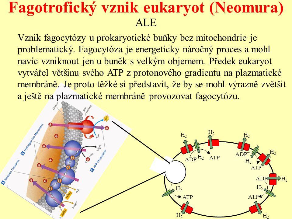 ALE Vznik fagocytózy u prokaryotické buňky bez mitochondrie je problematický. Fagocytóza je energeticky náročný proces a mohl navíc vzniknout jen u bu
