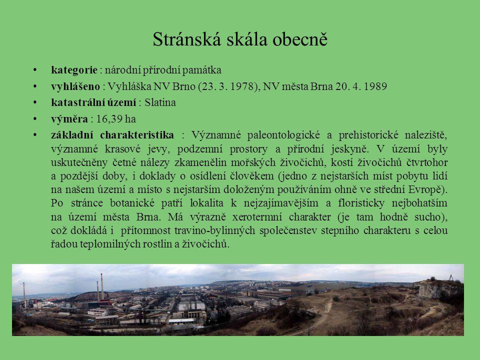 1.Geologická historie Stránské skály Stránskou skálu tvoří druhohorní, jurské vápence.