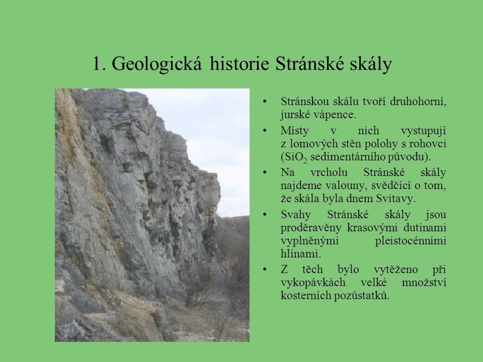 1. Geologická historie Stránské skály Stránskou skálu tvoří druhohorní, jurské vápence. Místy v nich vystupují z lomových stěn polohy s rohovci (SiO 2