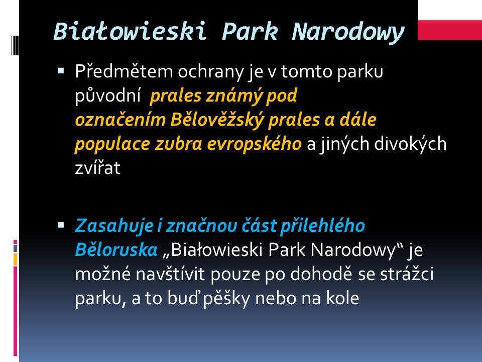 """Białowieski Park Narodowy  Předmětem ochrany je v tomto parku původní prales známý pod označením Bělověžský prales a dále populace zubra evropského a jiných divokých zvířat  Zasahuje i značnou část přilehlého Běloruska """"Białowieski Park Narodowy je možné navštívit pouze po dohodě se strážci parku, a to buď pěšky nebo na kole"""