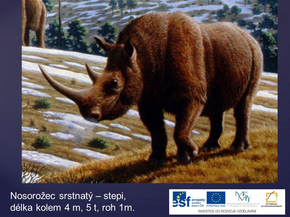 Nosorožec srstnatý – stepi, délka kolem 4 m, 5 t, roh 1m.