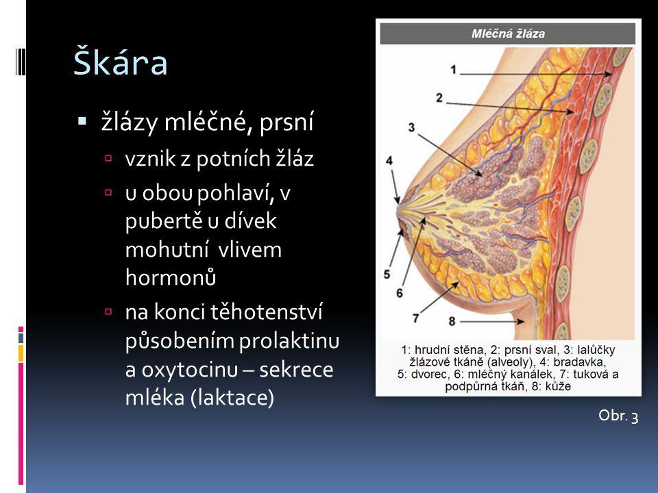 Škára  žlázy mléčné, prsní  vznik z potních žláz  u obou pohlaví, v pubertě u dívek mohutní vlivem hormonů  na konci těhotenství působením prolakt