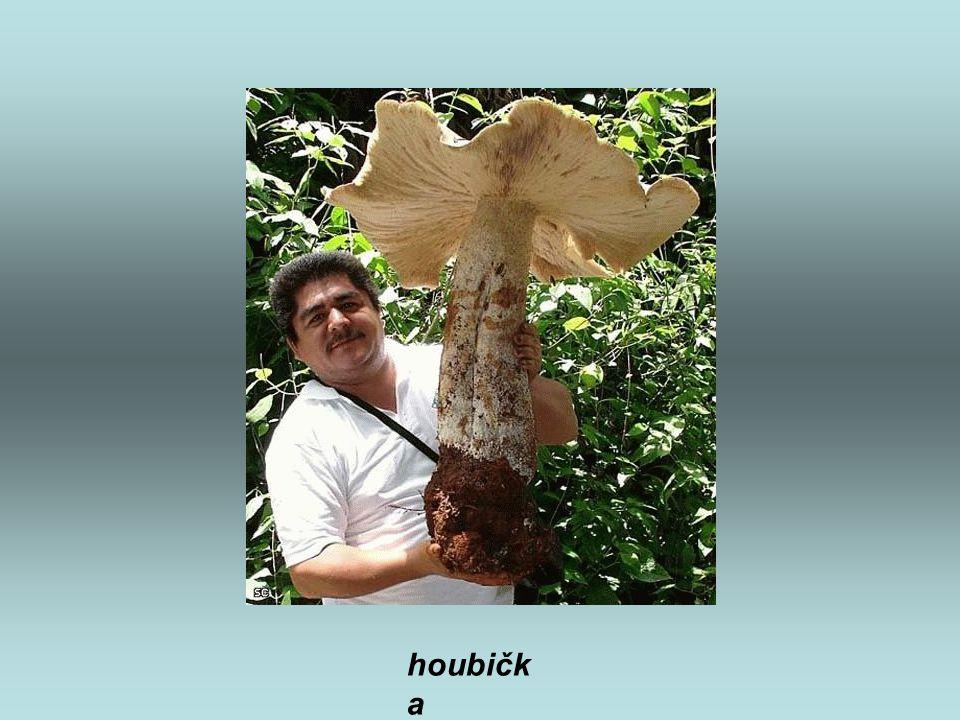 houbičk a
