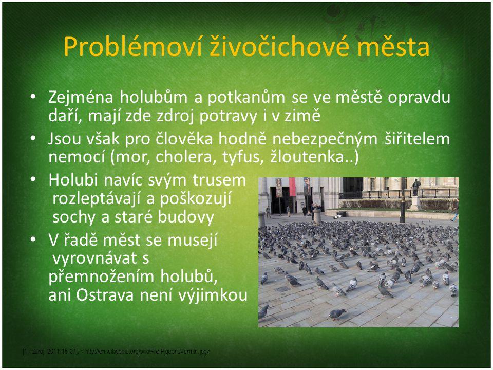 Problémoví živočichové města Zejména holubům a potkanům se ve městě opravdu daří, mají zde zdroj potravy i v zimě Jsou však pro člověka hodně nebezpeč