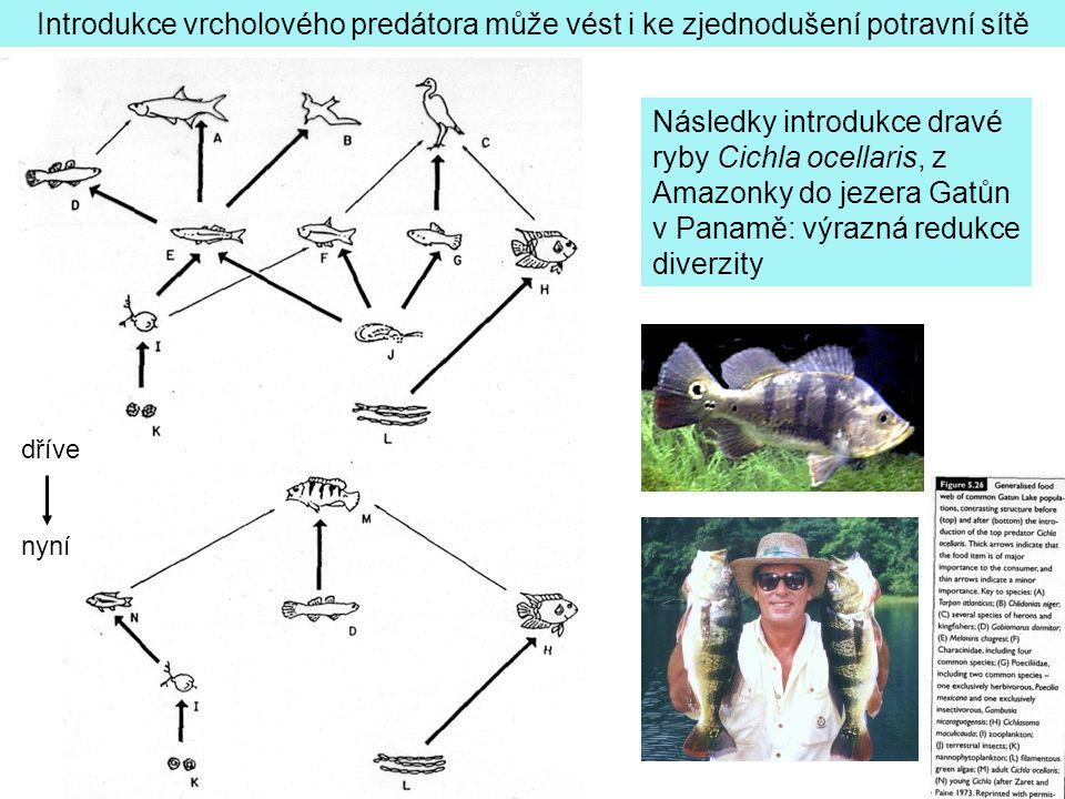 Následky introdukce dravé ryby Cichla ocellaris, z Amazonky do jezera Gatůn v Panamě: výrazná redukce diverzity Introdukce vrcholového predátora může vést i ke zjednodušení potravní sítě dříve nyní