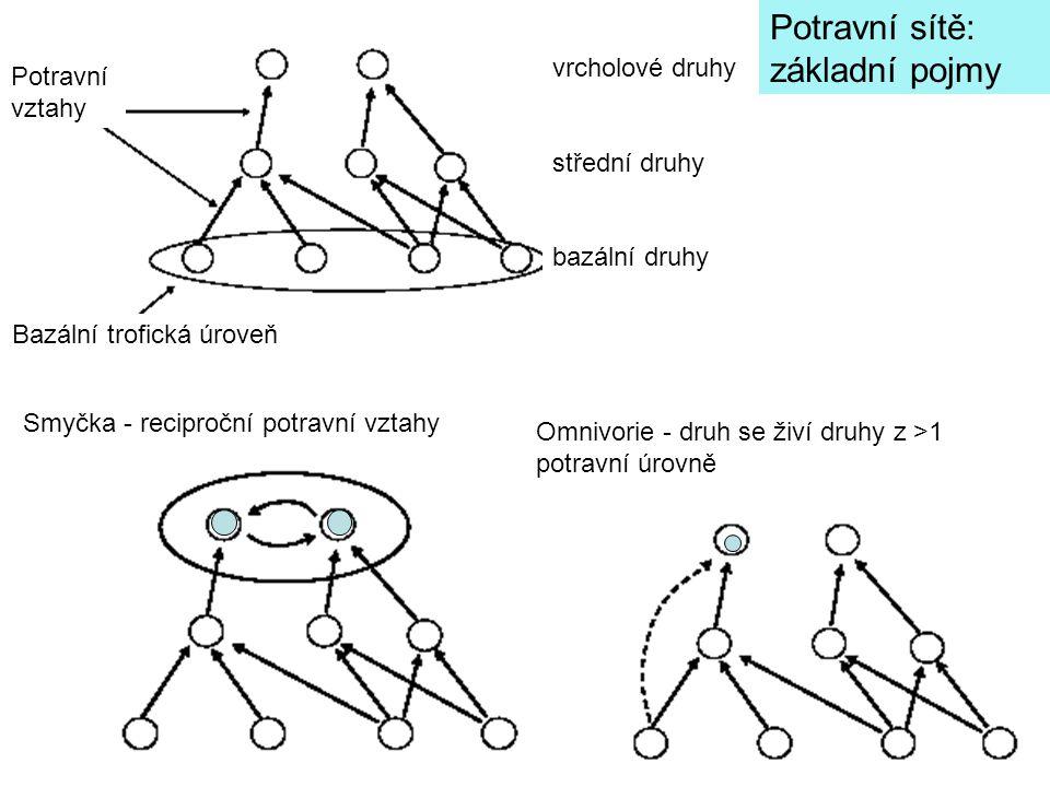 vrcholové druhy střední druhy bazální druhy Potravní sítě: základní pojmy Omnivorie - druh se živí druhy z >1 potravní úrovně Smyčka - reciproční potravní vztahy Bazální trofická úroveň Potravní vztahy