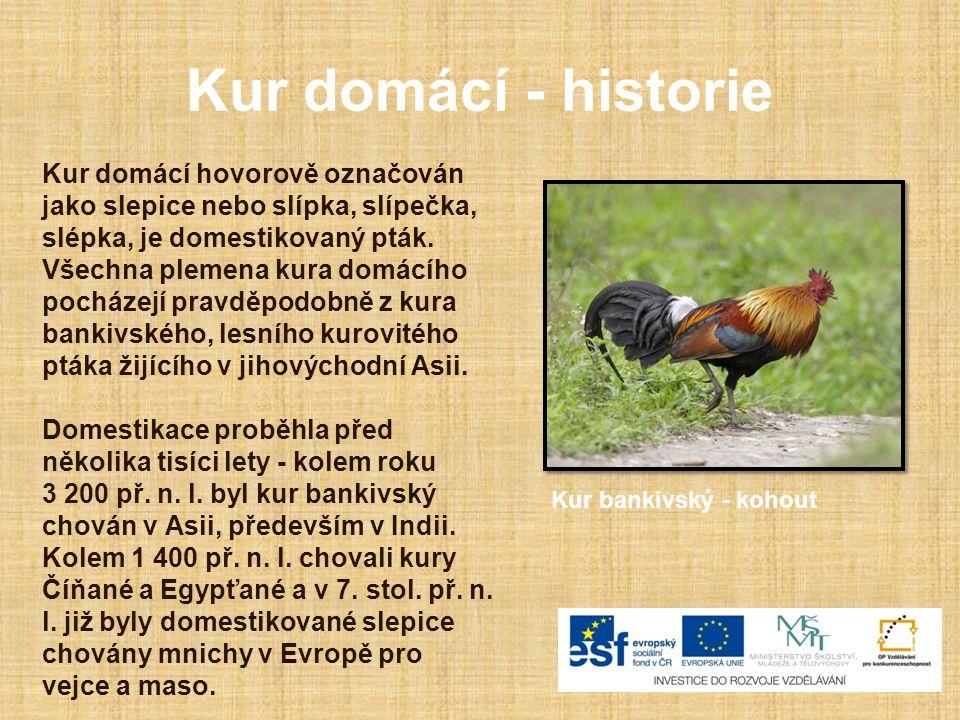 Kur domácí - historie Kur domácí hovorově označován jako slepice nebo slípka, slípečka, slépka, je domestikovaný pták. Všechna plemena kura domácího p