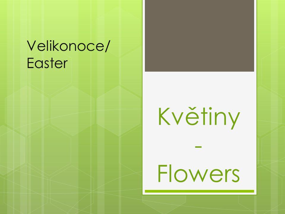 Velikonoce/ Easter Květiny - Flowers