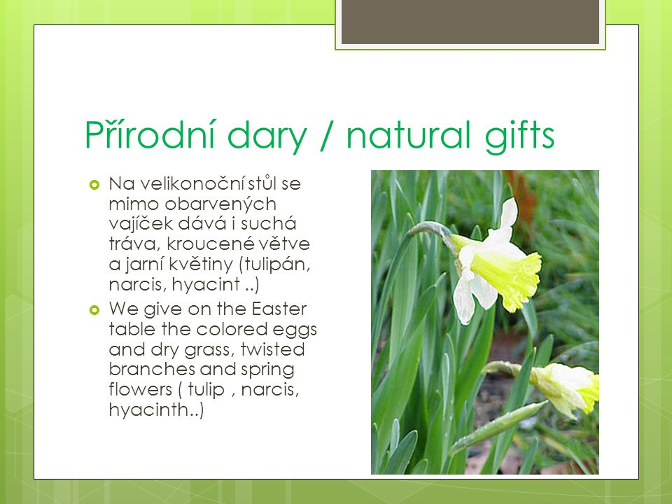 Přírodní dary / natural gifts  Na velikonoční stůl se mimo obarvených vajíček dává i suchá tráva, kroucené větve a jarní květiny (tulipán, narcis, hyacint..)  We give on the Easter table the colored eggs and dry grass, twisted branches and spring flowers ( tulip, narcis, hyacinth..)