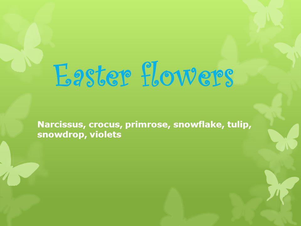 Easter flowers Narcissus, crocus, primrose, snowflake, tulip, snowdrop, violets