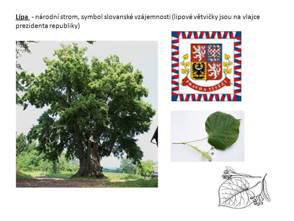 Lípa - národní strom, symbol slovanské vzájemnosti (lipové větvičky jsou na vlajce prezidenta republiky)