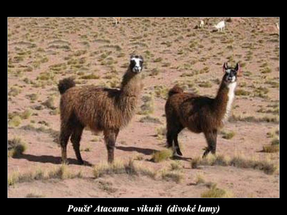 Poušť Atacama – severní Chile (nejsušší místo na zemi)