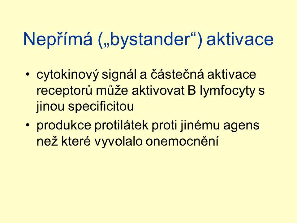 """Nepřímá (""""bystander"""") aktivace cytokinový signál a částečná aktivace receptorů může aktivovat B lymfocyty s jinou specificitou produkce protilátek pro"""