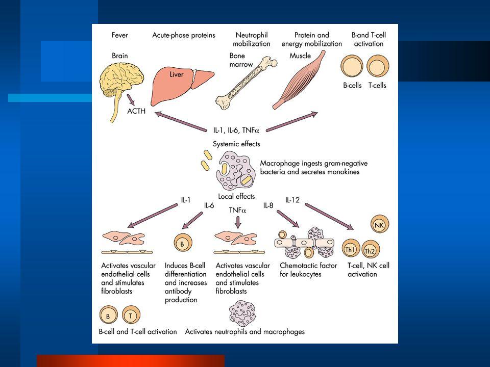 1.Nemoci jater 2.Infekce 3.Malignity 4.Aktivní SJIA 5.SLE 6.Kawasakiho nemoc 7.Hemofagocytující lymfocytóza 8.Hemochromatóza Obvyklé příčiny zvýšené sérové koncentrace feritinu