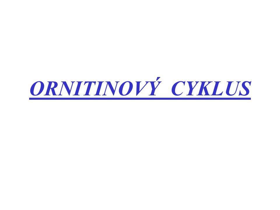 Močovinový – ornitonový cyklus (metabolismus dusíku) -princip objasněn r.