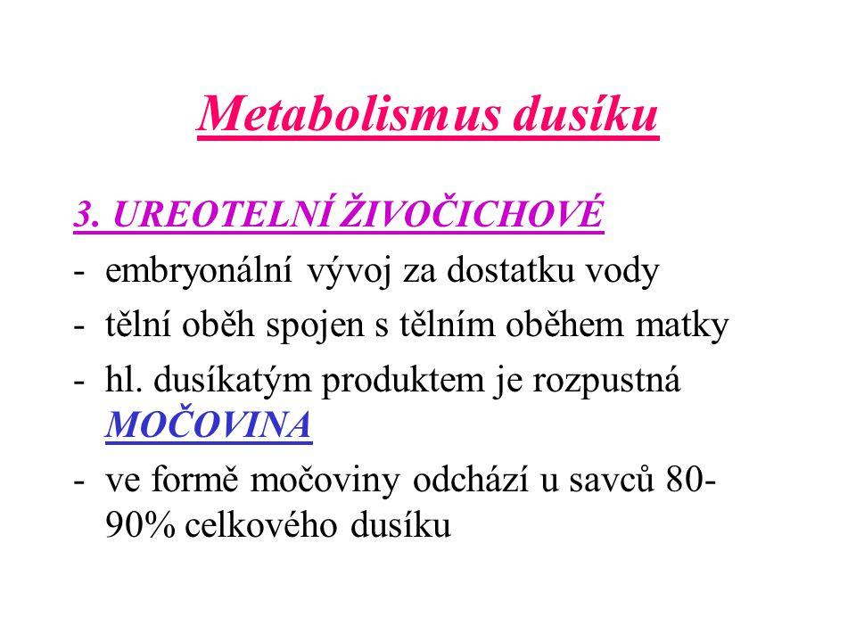 Metabolismus dusíku -10% slouží k neutralizaci kyselin – je vyloučen ledvinami -NH 3, který tělo odstraňuje je předáváno do krevního oběhu hlavně ve formě GLUTAMINU a ALANINU -ty přecházejí do jater – syntéza močoviny – ledviny – ionty NH 4 + - do moči -u rostlin – je dusík limitujícím růstovým faktorem ( nitrifikační, nitratační a hlízkové bakterie)