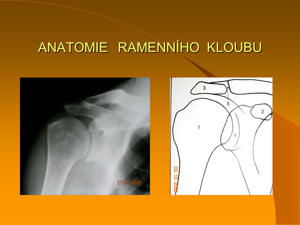 ANATOMIE RAMENNÍHO KLOUBU