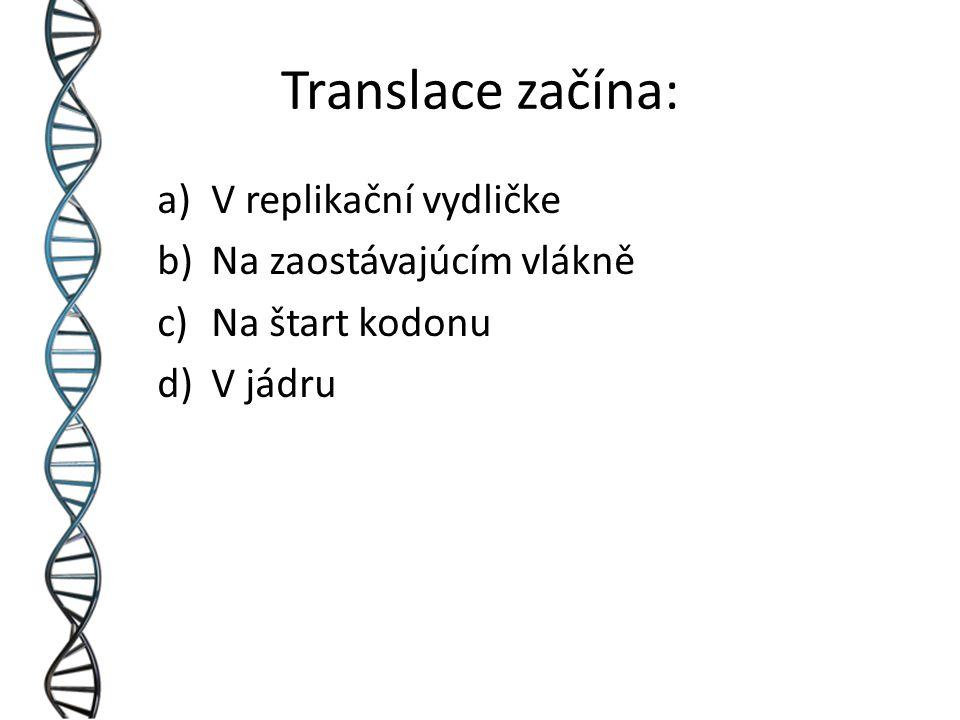 Translace začína: a)V replikační vydličke b)Na zaostávajúcím vlákně c)Na štart kodonu d)V jádru