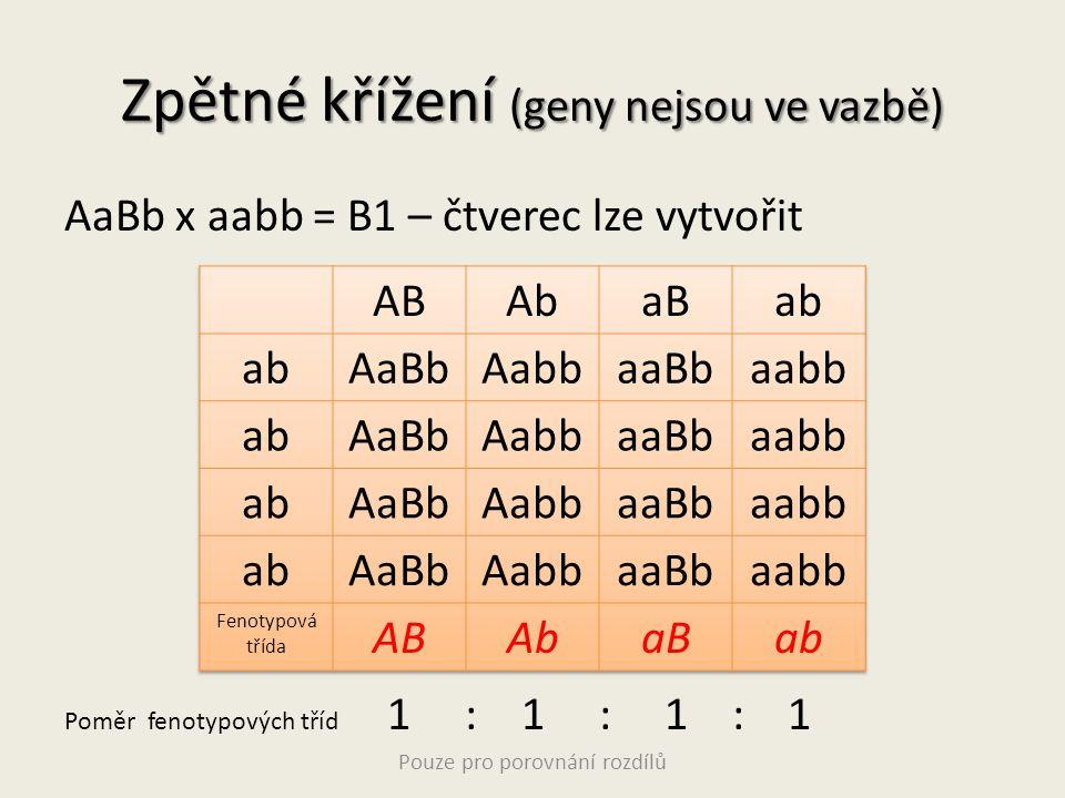 Zpětné křížení (geny nejsou ve vazbě) AaBb x aabb = B1 – čtverec lze vytvořit Poměr fenotypových tříd 1 : 1 : 1 : 1 Pouze pro porovnání rozdílů