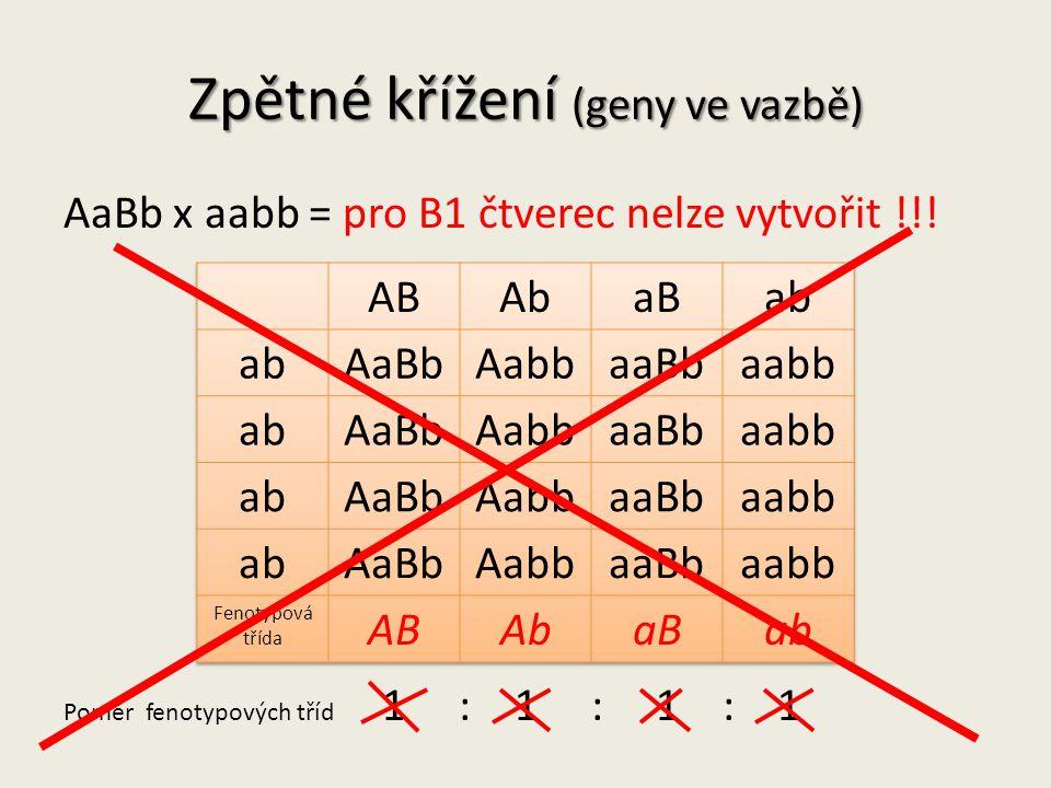 Zpětné křížení (geny ve vazbě) AaBb x aabb = pro B1 čtverec nelze vytvořit !!.