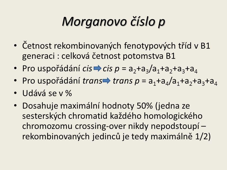 Morganovo číslo p Četnost rekombinovaných fenotypových tříd v B1 generaci : celková četnost potomstva B1 Pro uspořádání cis cis p = a 2 +a 3 /a 1 +a 2 +a 3 +a 4 Pro uspořádání trans trans p = a 1 +a 4 /a 1 +a 2 +a 3 +a 4 Udává se v % Dosahuje maximální hodnoty 50% (jedna ze sesterských chromatid každého homologického chromozomu crossing-over nikdy nepodstoupí – rekombinovaných jedinců je tedy maximálně 1/2)
