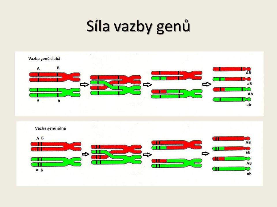 Situace 2 Zpětné křížení AaBb x aabb Geny leží na stejném chromozomu – jsou ve vazbě